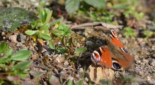 environnement-biodiversite-papillon