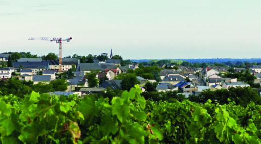 Les vignes à Chalonnes-sur-Loire